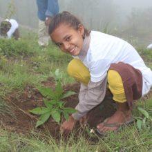 Baumpflanzen-Naturschule-Indien